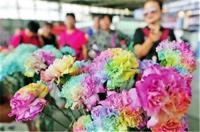 七彩康乃馨亮相昆明国际花卉展