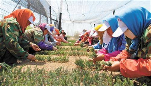 开原市苗木花卉产值达19.7亿