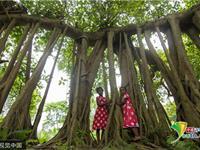 """孟加拉""""树怪"""" 现独木成林景观"""