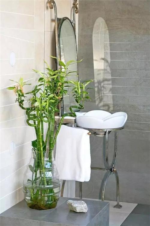 橡皮树的叶片厚实,新叶偏红,老叶呈褐绿色,是一种室内大型植物.
