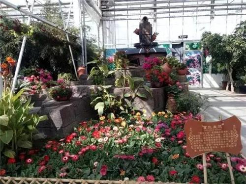 宁夏园艺产业园,观赏热带植物体验农耕文化图片