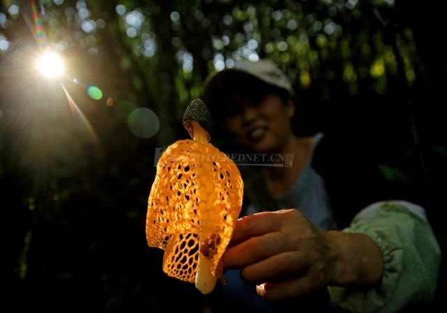 郴州发现神秘金菌