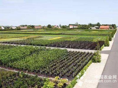 浙江:萧山做好亚运区块苗木工作
