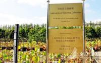中国首个国际荷花资源圃在辰山植物园正式挂牌