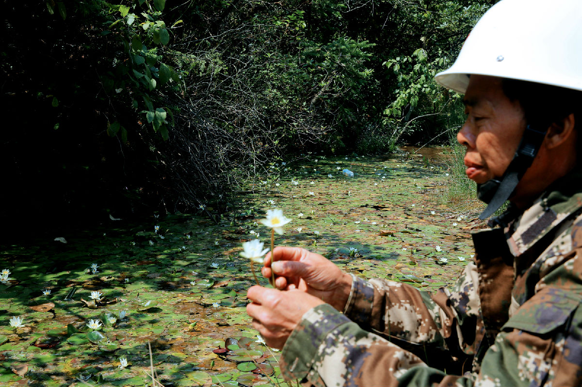 湖南发现国家Ⅰ级重点保护野生植物莼菜