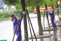 种树养护七注意(七):关于大树支撑的材料与方法总结