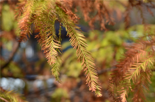 """厦门植物并非都""""四季常绿"""" 冬季也会""""换新装"""""""