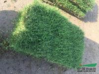 浙江萧山:今年草坪供销两旺