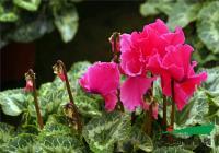 春节技能包 从养花中领悟卖树?