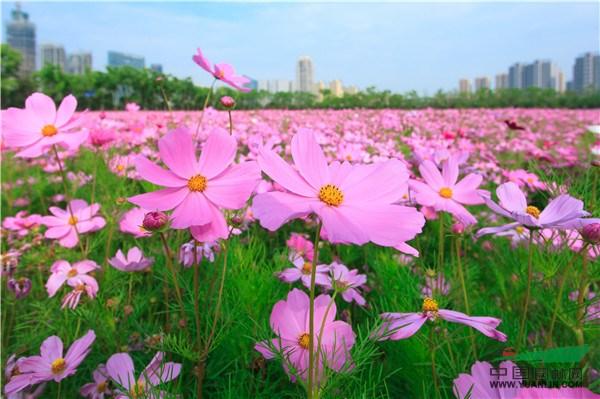 中国美术学院风景建筑设计研究院 施工单位:浙江金五月生态科技发展