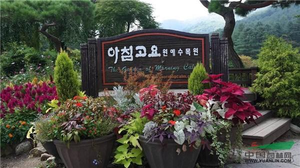 园艺疗法:在侍花弄草中复健心灵
