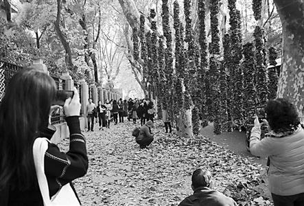 上海:悬铃木叶装饰雕塑点缀街道