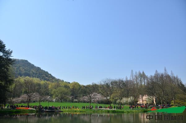 杭州西湖:天气爆好,赏花如潮