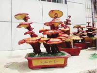 济南:灵芝盆景成新景 价高又畅销