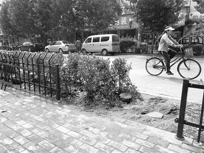 枣庄:一道路绿化护栏被私自截开