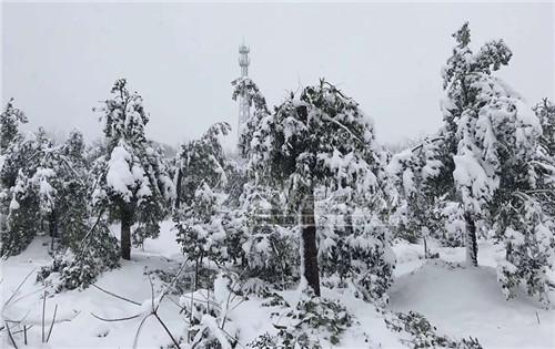 挖树机也可以除雪?看威威挖树如何变身除雪神器