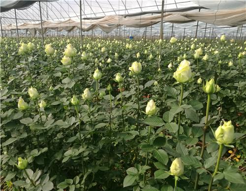 云南:云秀创业园将成助推花卉产业发展重要平台