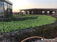 报名┃立体绿化实用技术(上海)培训班