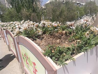 西宁:花箱被抬树苗被拔 采花贼太可恶