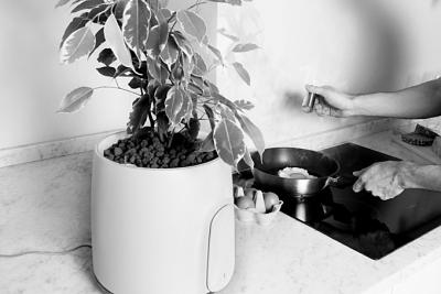美国研究出可做空气净化器的花盆