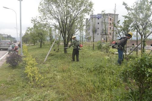浙江龙山镇:割草机助力生态公路养护