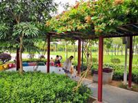 广州市儿童公园花架繁花盛开