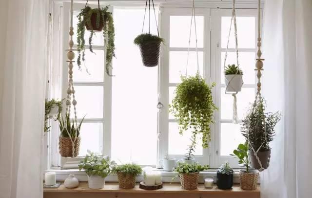 教你如何打造绝美的窗台花园
