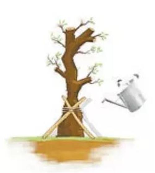 """该如何拯救""""山竹""""过后的树木"""