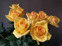 """云南""""10大名品""""评选结果揭晓  10个花卉产品获评""""10大名花"""""""