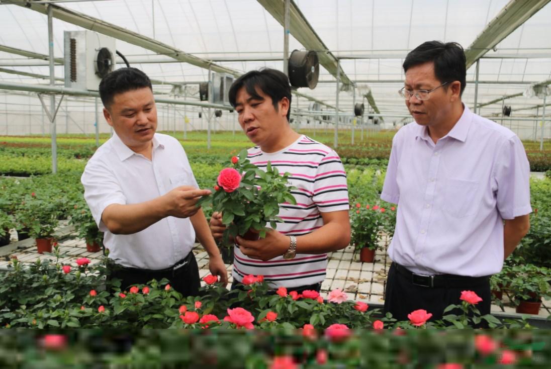 玉溪市盆栽月季工程技术研究中心