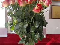 三个花卉品种入列云南省农业主导品种名单