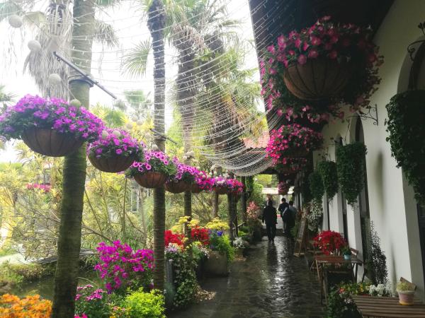 2019第五届上海家庭园艺展尽显家庭园艺美丽