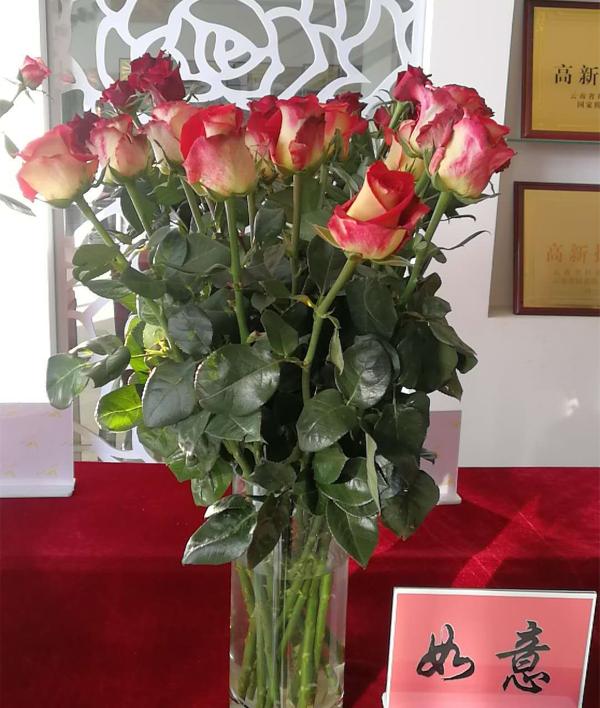 切花月季新品种'如意'入列云南省农业主导品种