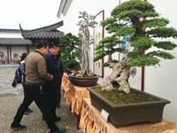 南阳盆景艺术展为世界月季洲际大会添彩