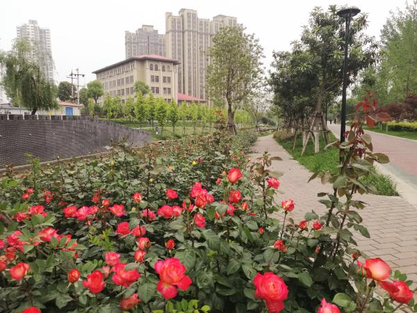 南阳汉城河由臭水河蝶变景观廊道