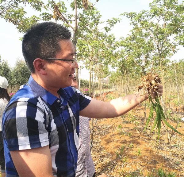 滇苗企创新苗木生产模式 苗下套种白芨效益明显