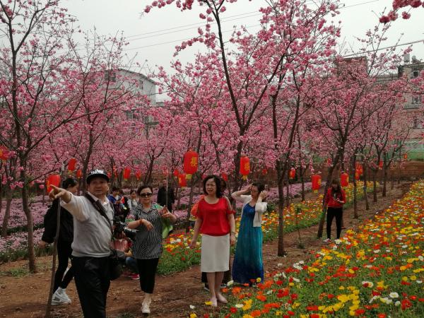中國櫻花旅游熱浪襲人
