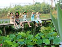 文蚌埠市第四届荷花节即将拉开序幕