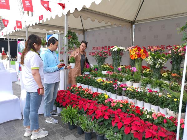 云南品牌鲜花为中国品牌日云南省暨昆明市特色活动添彩