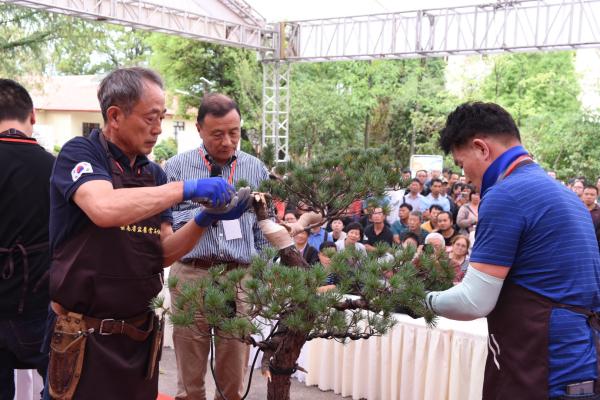 2019年(BCI)中国区会员盆景精品展在昆开展