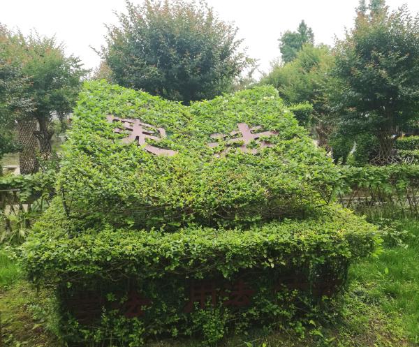 成都温江区法治文化编艺公园展示植物编艺技艺