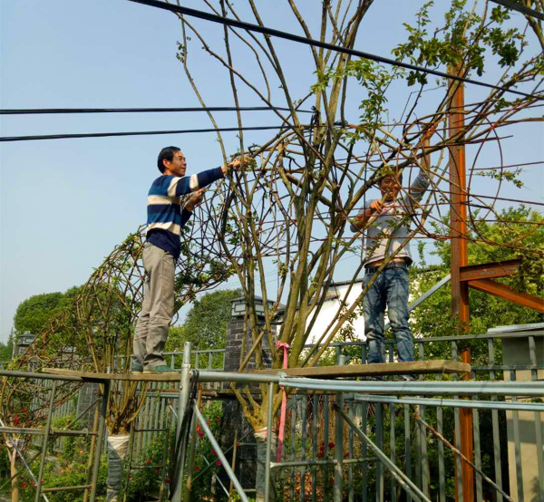 溫江壽安鎮打造萬畝植物編藝集群