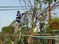 温江寿安镇打造万亩植物编艺集群