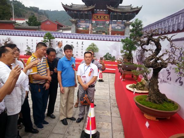 云南通海:盆景產業蓬勃發展