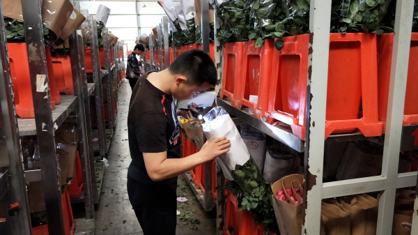 七夕节来临:昆明斗南花市鲜花价格冰火两重天