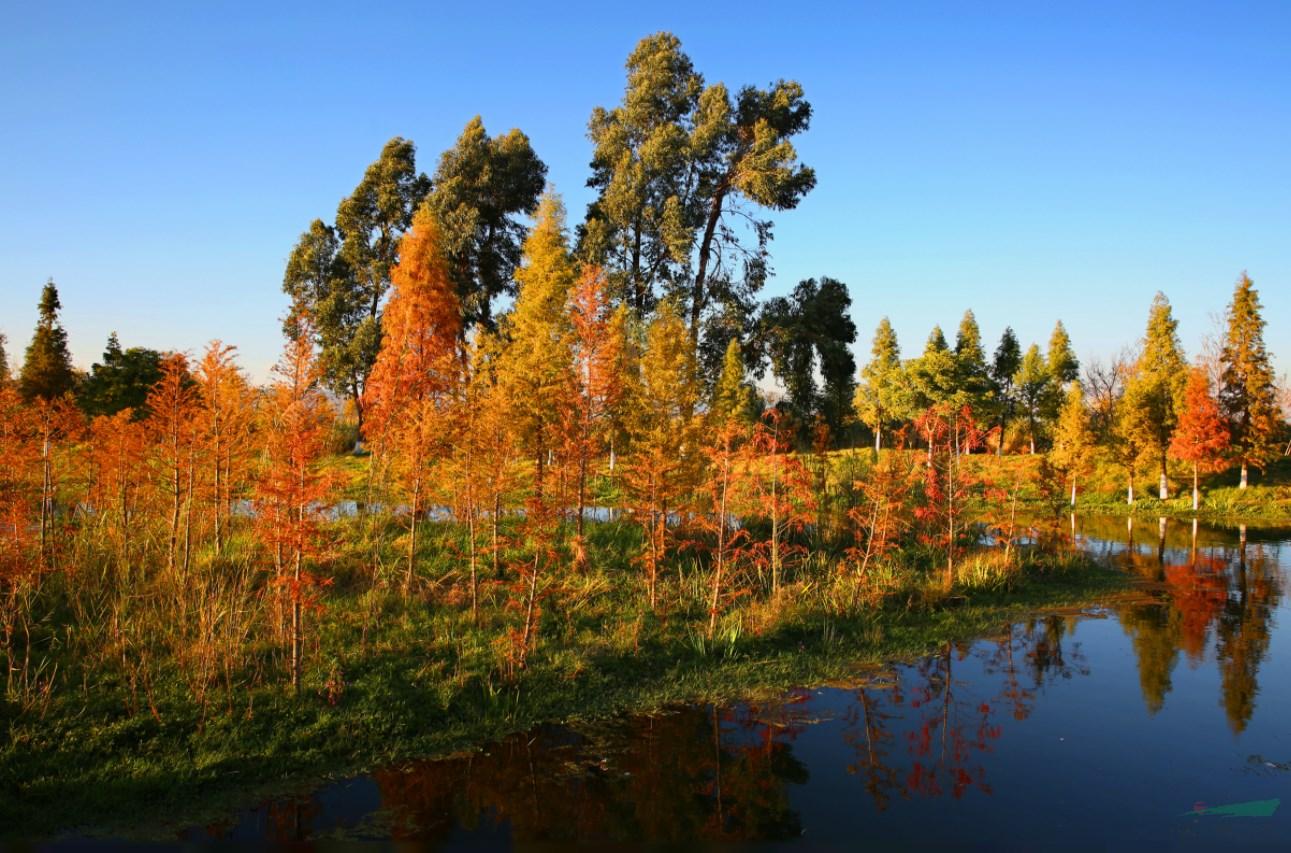 """南滇池湿地成昆明首个""""国家湿地公园"""""""