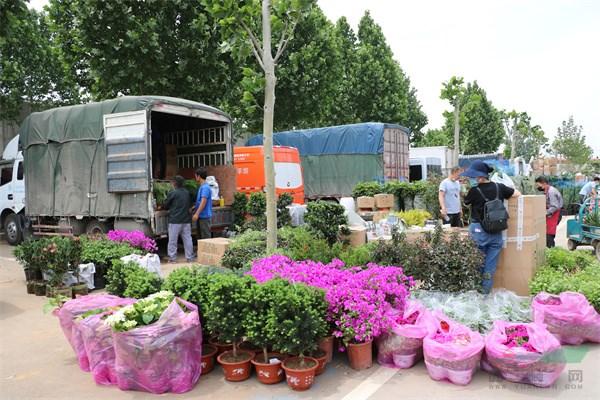 繁荣的花卉市场.jpg