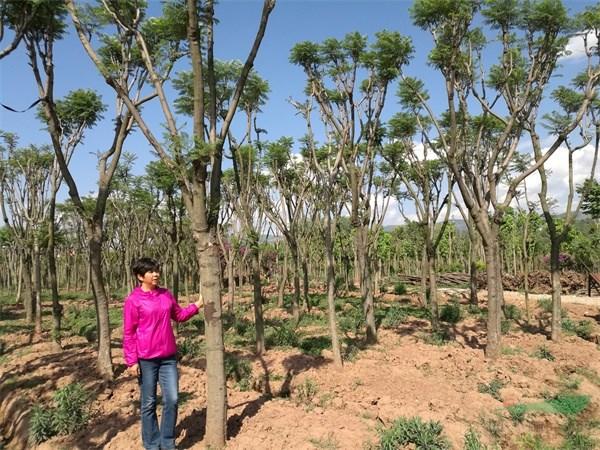 金牛注册登录中心培植高质量苗木势在必行