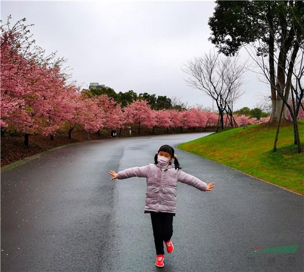 金牛注册登录中心上海顾村公园十年磨一剑:樱花烂漫春满园 美景如画醉游人