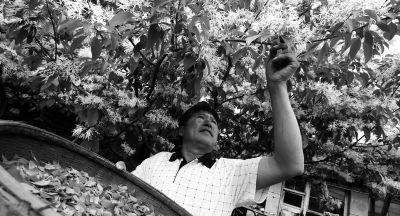 眼下,正值野生茶树—流苏树开花时节,老魏在一树繁花下,品着自己种的